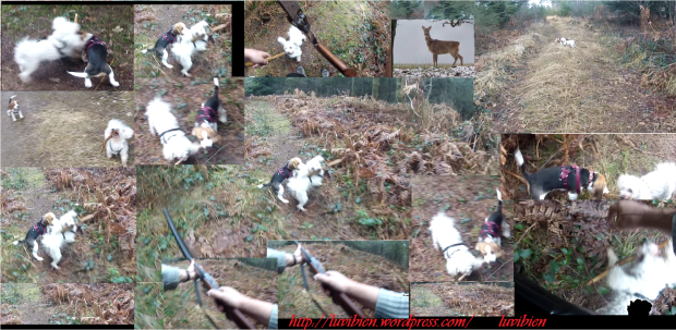marie et lucien avec les chienne de chasse