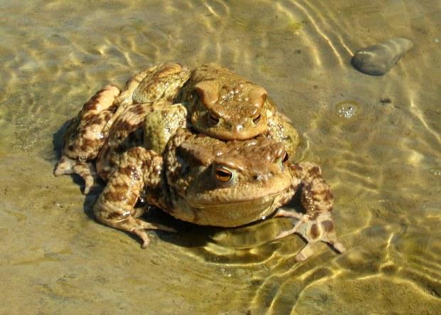 sur la route j'ai rencontré des grenouilles 1