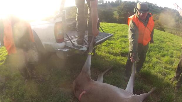 160 kg de viande une biche9